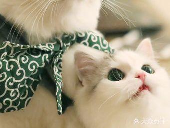 喵玩名猫生活馆(南京西路店)