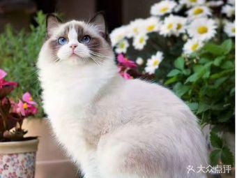 喵语国际名猫舍