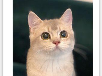 猫大福·Fortune Cat猫舍(百子湾店)